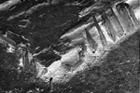 Drohiczyn - narożnik podwaliny budynku drewnianego, fot. J. Jaskanis, 1959