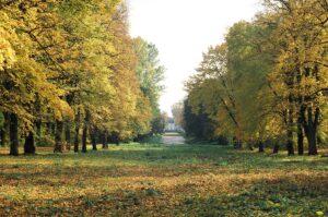 Widok na zielone drzewa w parku przy Muzeum Wnętrz Pałacowych w Choroszczy.